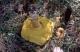 thumb_Xerocomus-badius.jpg